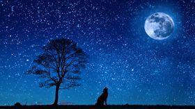 lobo azul con luna-pruebas pixlr-o-matic en rosapanos.com(CC0)-dim 280